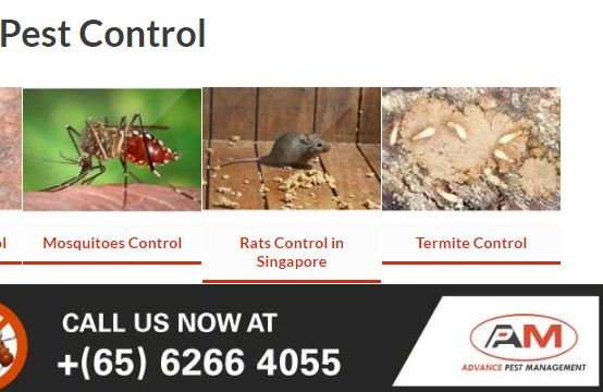singapore pest control Advance pest